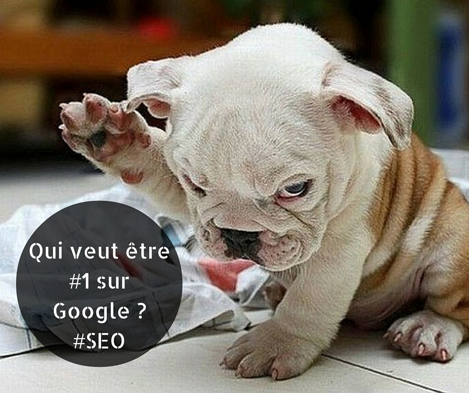 SEO referencement Google